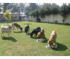 Pet Boarding Kennels in Delhi