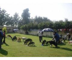 Pet & Dog Boarding & Day Care in Rohini, Delhi