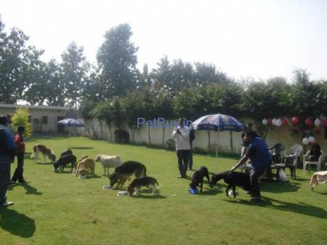 DOG BOARDING & TRAINING CENTER IN NOIDA - 1/2