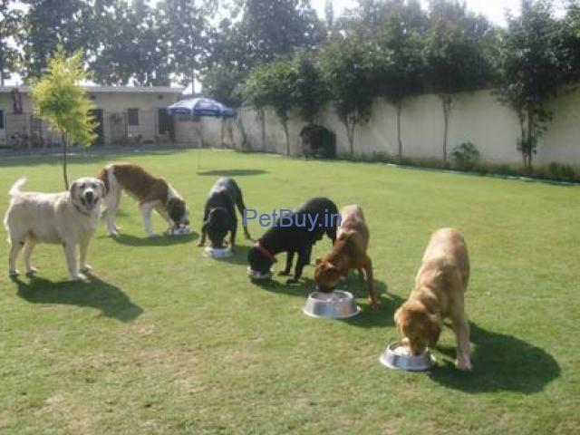 DOG BOARDING & TRAINING CENTER IN NOIDA - 2/2