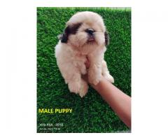 All breed puppies are available call and what's 7017271170